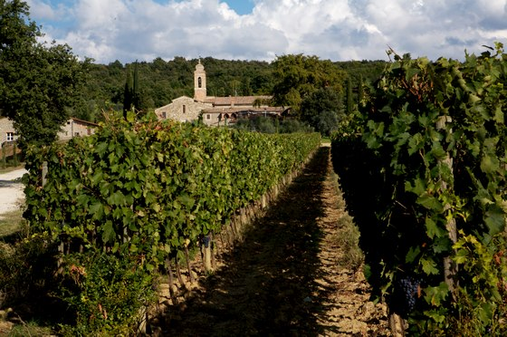 PieveSRestituta_vineyard_church_560w